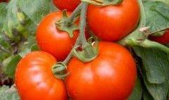 农残速测仪降低农残超标概率