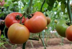 与实验室检测相比,农残快速检测仪有哪些优势?