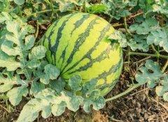 如何购买高性价比的农药残留速测仪?