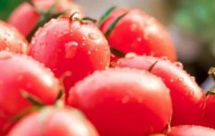 农药残留检测仪可以深入农田进行检测